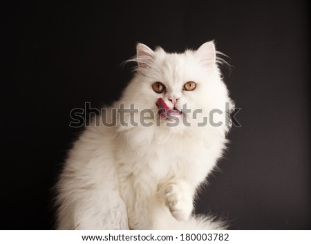 Adorable white kitten licking its mouth - stock photo