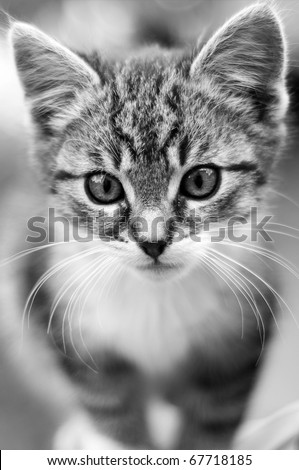 Adorable young cat - stock photo