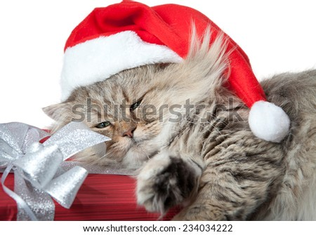 Adult and serious Christmas cat in red Santa Claus cap with red gift and ribbon isolated on white background - stock photo