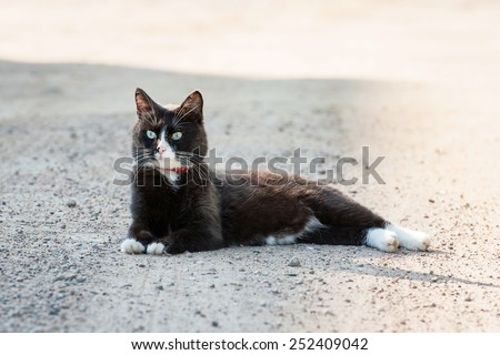 Adult black and white cat lying in the shade - stock photo