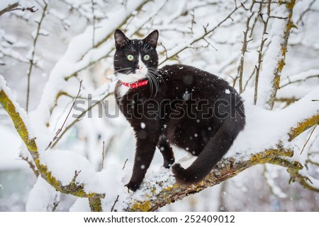Adult black and white cat sitting on the tree in winter - stock photo