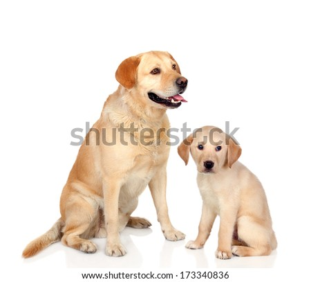 Adult dog with puppy sitting isolated on white background  - stock photo