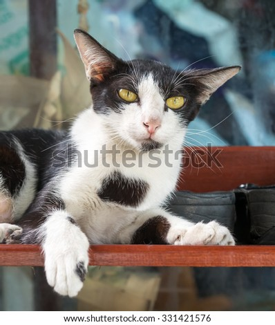 Adult female cat lay on shoe shelf in outdoor corridor, selective focus on its eye