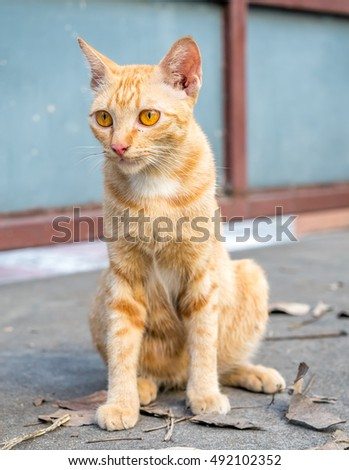Adult golden brown cat sit on outdoor concrete floor, selective focus on its eye