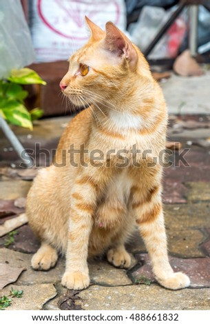 Adult golden brown cat sit on outdoor untidy backyard garden under natural light, selective focus on its eye