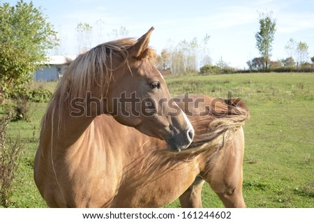 Adult horse in a large green pasture - stock photo