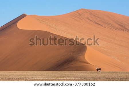 Adult Male Oryx standing against Sossusvlei Sand Dunes in Namibia - stock photo