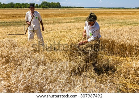 Adult man is making sheaf of mowed wheat. - stock photo
