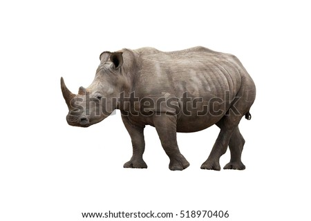 Adult rhinoceros, side view, isolated on white background.