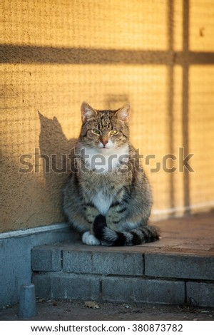 Adult tabby cat sitting in the yard - stock photo