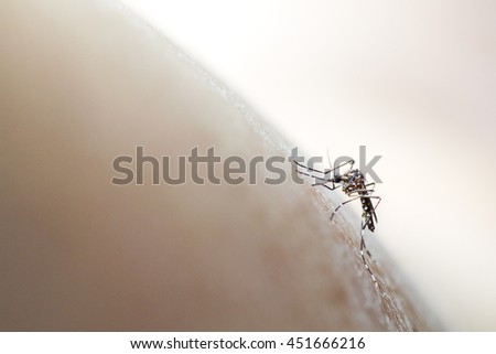 Aedes aegypti mosquito biting/sucking into human skin, soft focus medical background. The dengue virus and the zika virus are carried and spread by mosquitoes in the genus Aedes - stock photo