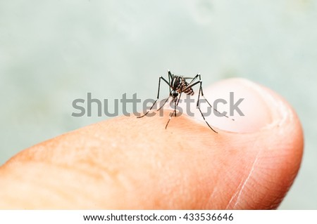 Aedes mosquito bite on skin. Mosquito is carrier of Malaria, Encephalitis, Dengue, Nipa and Zika virus. - stock photo
