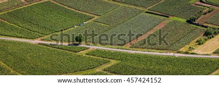 Aerial panoramic view of vineyards fields crossed by a road and a tree in the middle