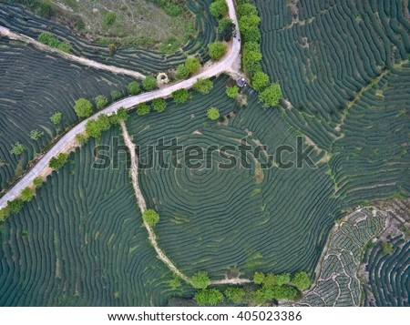Aerial photography at Spring mountain tea garden landscape with winding road - stock photo