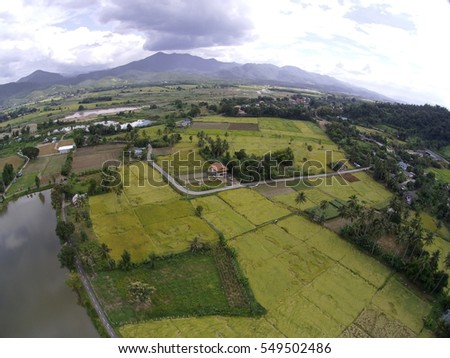 Aerial photography field rice
