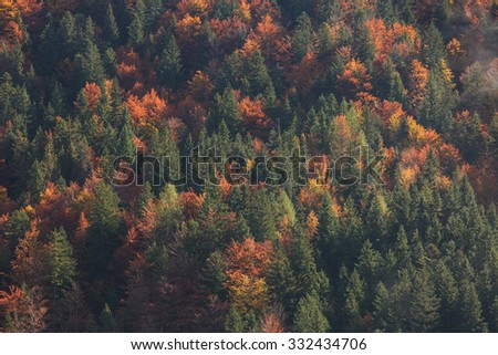 Aerial shot of coniferous and deciduous mountain forest in autumn colors in a mountainous area. Seasons changing, unique sunlight concept, textured background.  - stock photo