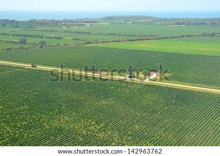aerial view across the vineyards of Pelee Island, Lake Erie in the background - stock photo