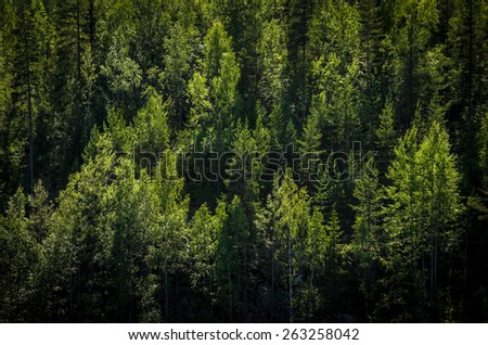 aerial view at the summer forest - stock photo