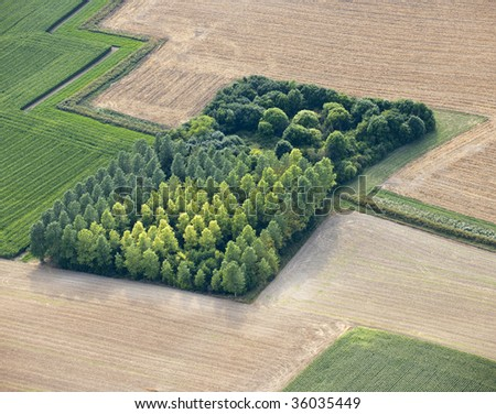 Aerial View : isolated wood in fields - stock photo