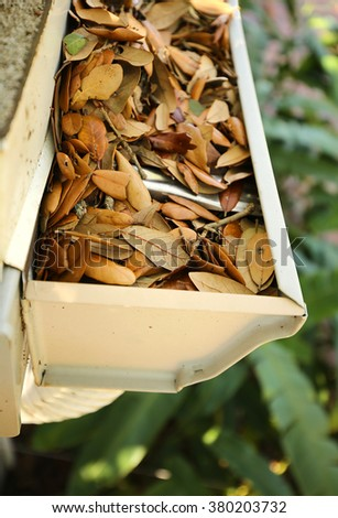 Aerial view of a clogged gutter and downspout filled with live oak leaves - stock photo