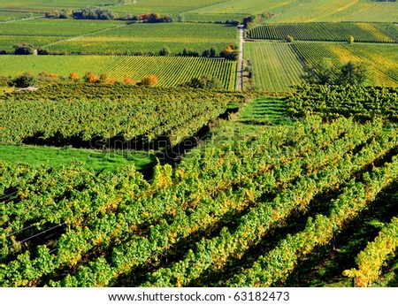 Aerial view of a vineyard in Germany