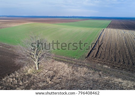 Aerial view of agricultural green and brown hilly fields in perspective, shoot from drone in winter time