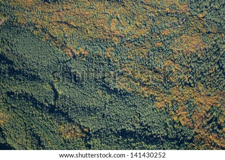 Aerial view of autumn forest - stock photo