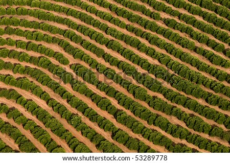 Aerial View of citrus grove   in Israel - stock photo