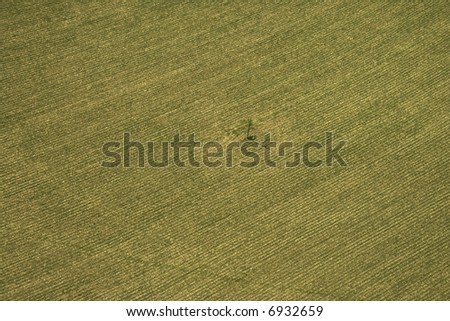 Aerial view of cultivated crop. - stock photo