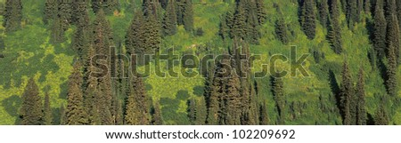 Aerial view of forest on mountainside - stock photo