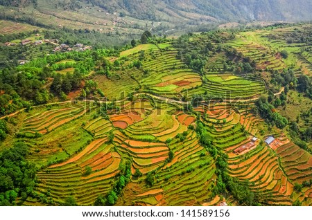 Aerial view of green and colorful rice field terraces, Nepal - stock photo