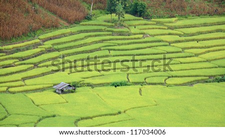 Aerial view of house at rice field terraces at northern Thailand - stock photo