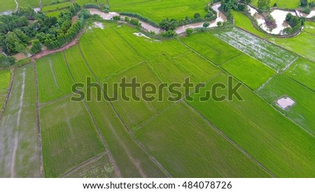 Aerial view of paddy field .