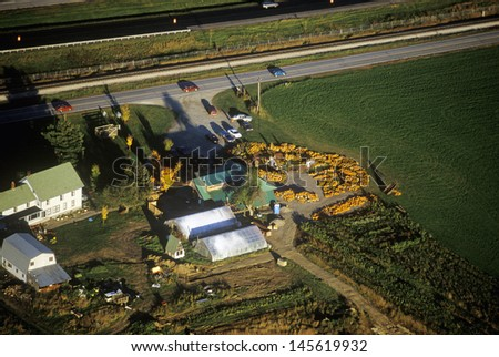 Aerial view of pumpkin patch on Scenic Route 100 in autumn in VT - stock photo