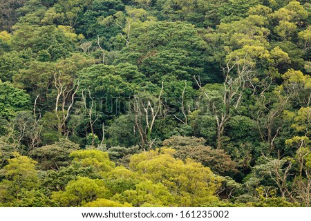 aerial view of rainforest canopy - stock photo
