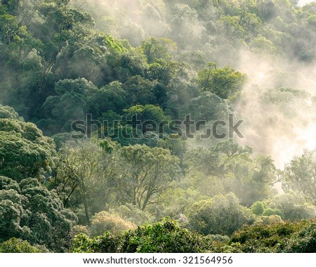 Aerial view of rainforest with mist and sunlight  in the morning, Chiang Mai, Thailand. - stock photo