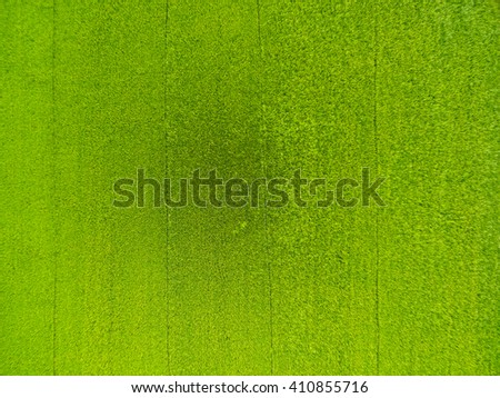 aerial view of rice, fields agricultural landscape of Asia thailand, top and birdeyes view shot 90 degree - stock photo