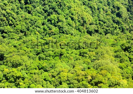 Aerial view of the forest - stock photo