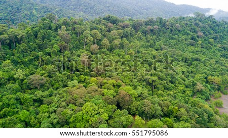 Aerial view of tropical rainforest in Koh Tarutao island, Thailand