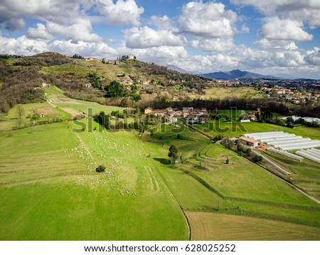Aerial view of typical Lumbardy countryside with vineyards and sheep flock. Montevecchia church in backgrount tophill. Italy.