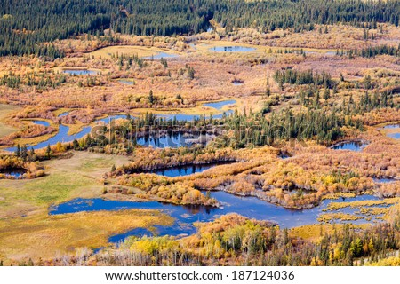 Aerial view of wet marshland in autumn fall colored boreal forest taiga of Yukon Territory, Canada - stock photo