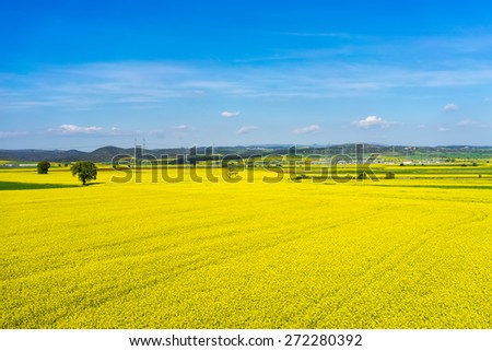 aerial view rural landscape with blooming rape at the north Greece - stock photo