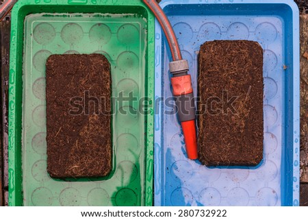 Aerial view wet peat full blocks in tablet with garden hose  Green and blue plastic tray with coconut substrate coir briquet absorbing water, for urban gardening and agriculture concept - stock photo