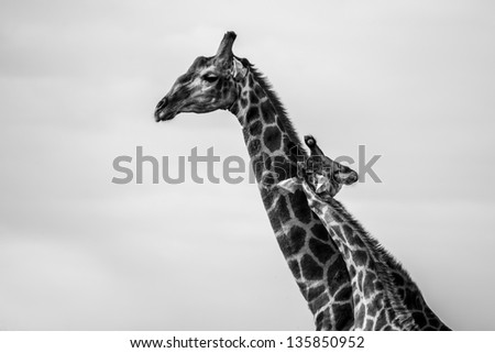 Affection - stock photo