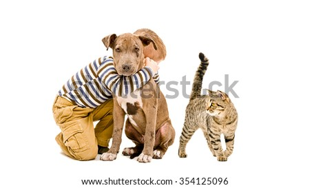 Affectionate boy, pit bull puppy and cat together, isolated on a white background - stock photo