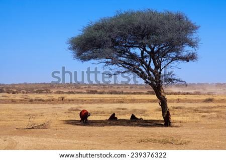 Africa Savanna landscape  - stock photo