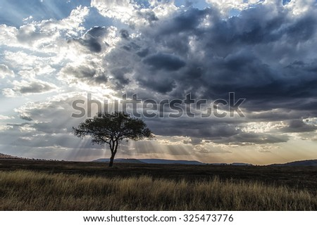 Africa, Tanzania Serengeti National Park sunset