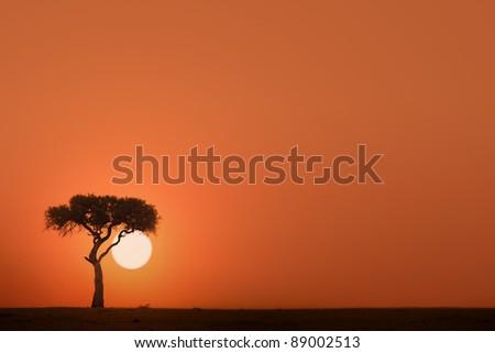 African acacia tree at sunset - stock photo