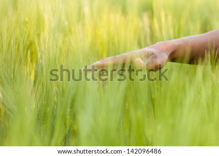 African American hand in wheat field - African people - stock photo