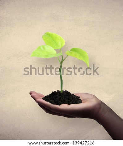 African american women holding a seedling. Textured background. - stock photo